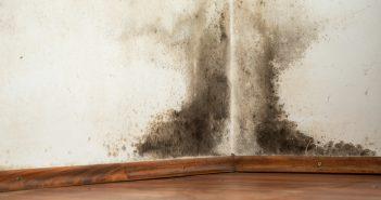 Schimmel- und Pilzsporen in der Wohnung sind gefährlich.