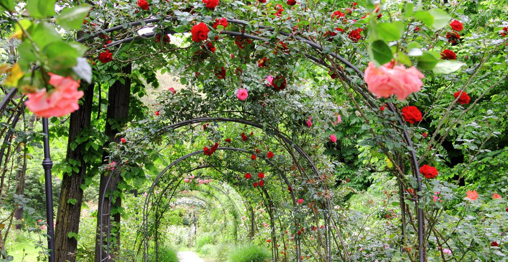 rosenbogen romantik auf dem gartenweg ratgeber haus. Black Bedroom Furniture Sets. Home Design Ideas