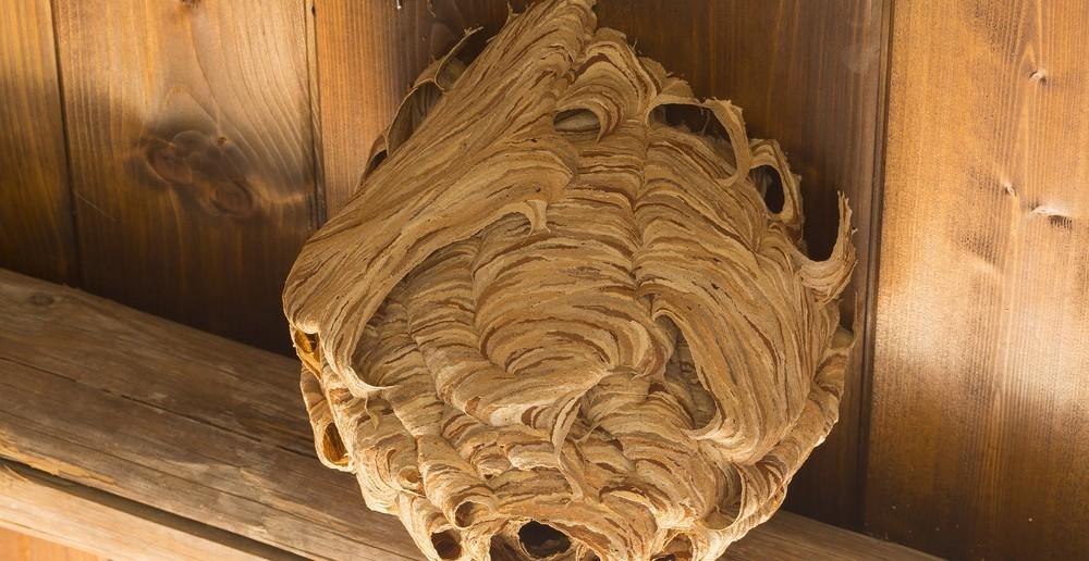 hilfe beim wespennest im haus oder garten ratgeber haus garten. Black Bedroom Furniture Sets. Home Design Ideas